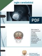 Fiziologia cerebelului