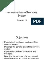 Chapter 11 Fundamentals of Nervous System revised