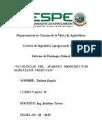 Zapata - Informe Patologias de Testiculos.docx