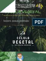 Célula Vegetal Estudiar