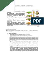 1. (trans) EMBRIOLOGÍA DE LA REGIÓN MAXILOFACIAL