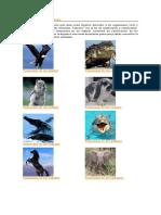 Taxonomía de Los Animales 02