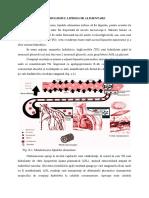 Metabolismul lipidelor.docx