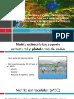 MEC presentacion final.pptx