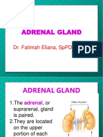 adrenal-1.ppt