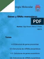 4.3-4.6 Est Genes y MRNA