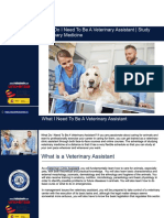 What Do I Need to Be a Veterinary Assistant