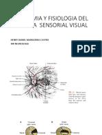 Anatomia y Fisiologia Del Sistema Sensorial Visual