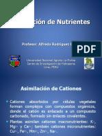 Asimilacion-Nutrientes