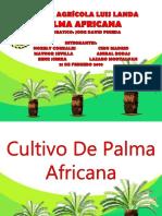 Palma Africana Presentacion