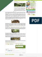 Como Plantar Espinafre. Dicas Práticas de Cultivo! - GreenMe.com.Br