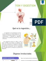 Ingestion y Digestion