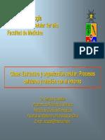 Clase 3-Estructura y Organizacion
