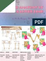 Applied Anatomy of Upper Lower Limb
