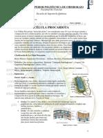 Célula Procarita.docx