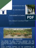 Estudios de Ajies Peruanos  AJI ROCOTO