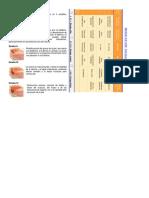 Clasificación DE UPP.docx