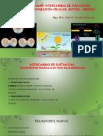 4 Fisiología Celular
