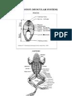 Sistem Otot Anatomi