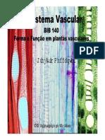 xilema (slide0.pdf