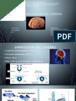 Tema II Cerebro y Desarrollo Embriologico