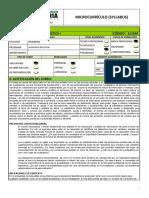 SYLLABUS DE ESTADISTICA UNIVERSIDAD UNIAGRARIA-YAMILE.pdf