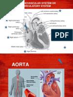 Cardiosvascular System