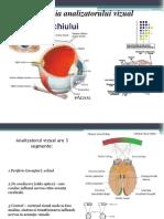Oftalmologie-Anatomie