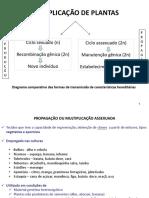 Aula 2 FORMAÇÃO E DESENVOLVIMENTO DE SEMENTES