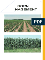 Corn_Management.pdf
