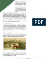 Felinos » Información, Características y Listado de Animales