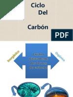 Ciclo de carbono.pdf