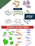 10 Bacterial Anatomy