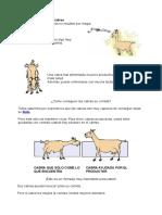 La Alimentación de Las Cabras