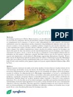 hormigas.pdf
