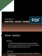 Anatomi Dasar Panggul