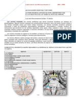Lab 9 Microanatomía