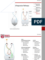 Optic Tract, Menace and Occulomotor Lesion