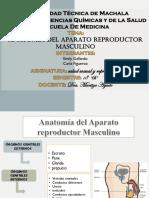 Anatomia Del Aparato Reproductor Femenino y Masculino