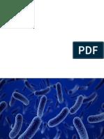 bacteris y hongos