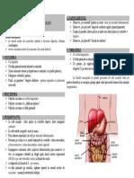 masajul abdomenului.pdf