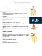 musculos cervical