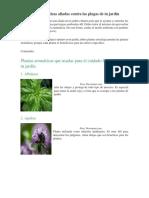 10 Plantas Aromáticas Aliadas Contra Las Plagas de Tu Jardín