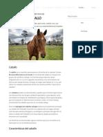 10 Características del Caballo.pdf