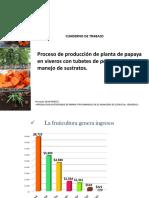 Proceso-de-producción-de-planta-de-papaya-en-viveros.pptx