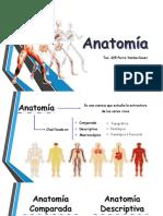 Diapositivas - GROEC - Anatomia.pptx