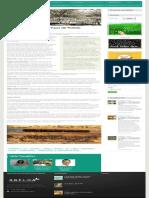 Entrevista – Vagner Arnaut de Toledo - A.B.E.L.H.A_.pdf