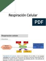 Respiración Celular.pptx