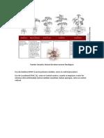 P. infestans. alternancia de productos.docx