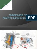 Embriología Del Aparato Reproductor